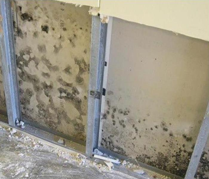 Dry wall that has been cut out to reveal the dark looking mold growing inside the wall
