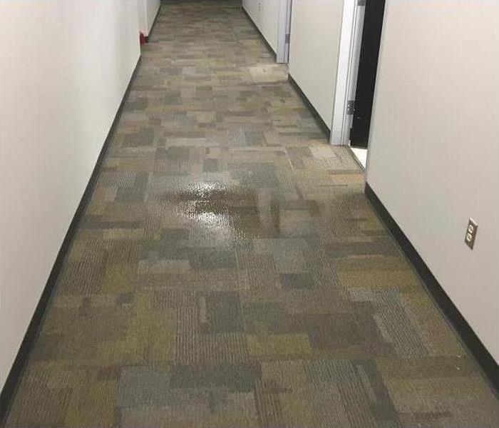 Water damaged hallway carpet.